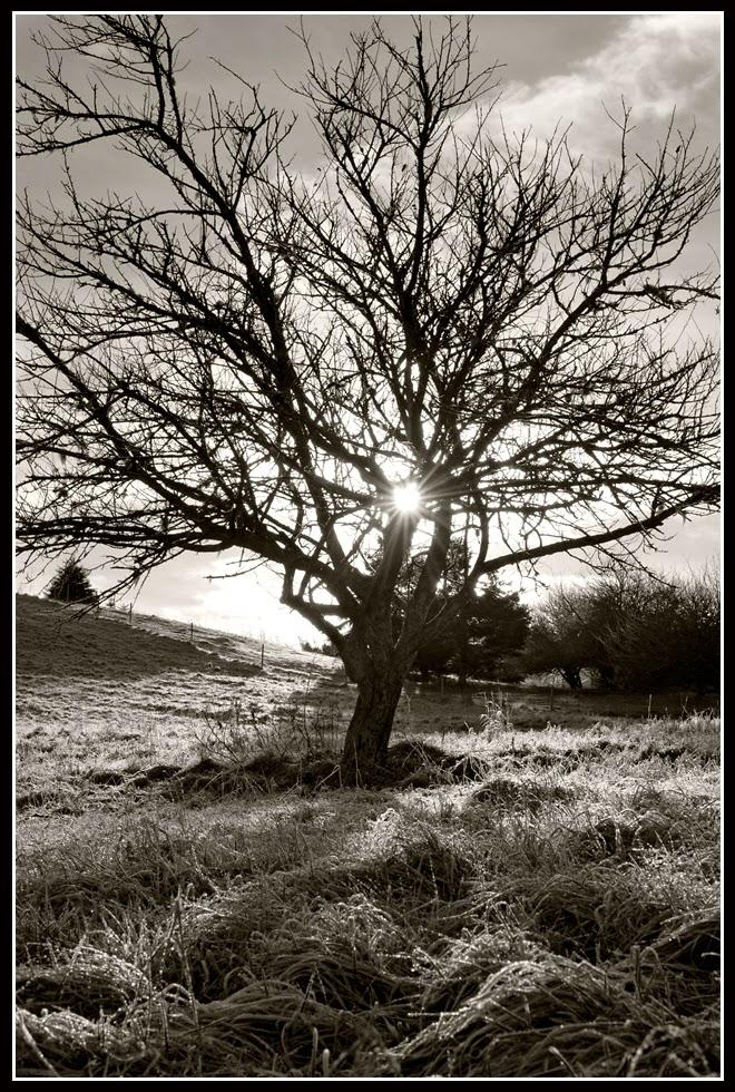 Nova Scotia; Tree; Sunrise; Frost