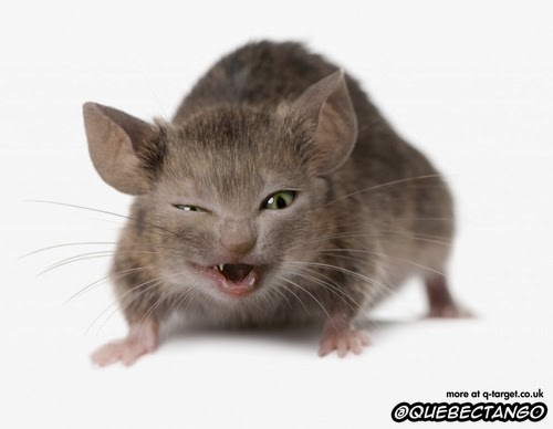 05-Cat-and-Mouse-a-Catuse-Graphics-Designer-Digital-Taxidermist-Animangler-www-designstack-co