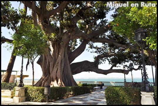 Ficus-Gigante-Alameda