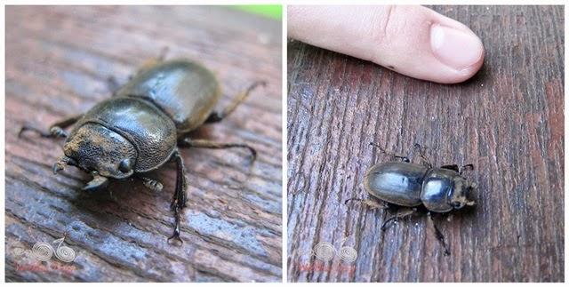 Bako National Park - Beetle - WireBliss