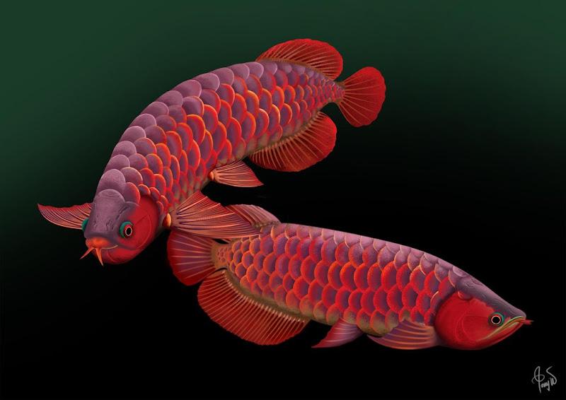 Arowana Care and Myths Surrounding The Dragon Fish