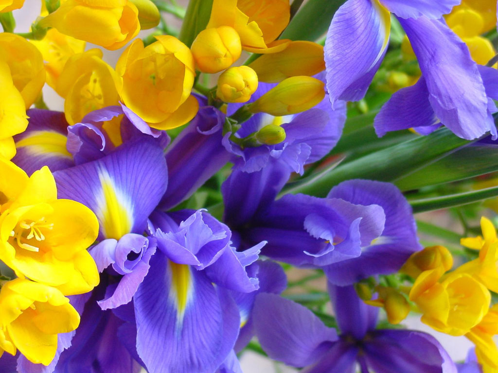 86ª Exposição de Orquídeas: repartindoemocoes.blogspot.com/2012/03/86-exposicao-de-orquideas.html
