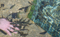Kangal Balıklı Çermik Kaplıcaları