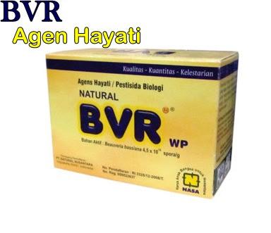 Natural BVR (Beuveria Bassiana) Agen Organik Hayati