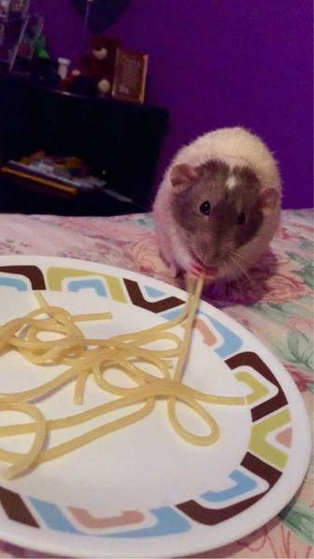 Funny animals of the week - 24 July 2015, funny animal photos, animal pictures