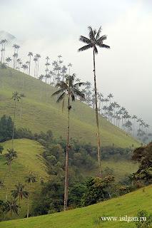 Долина Кокора. Колумбия