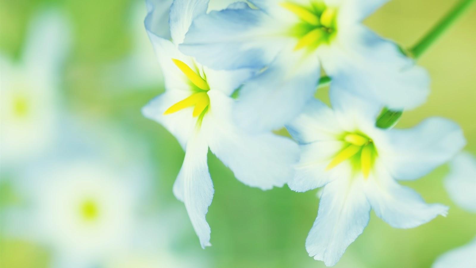 http://3.bp.blogspot.com/-0BPqOFjFvug/T9GVyZyf1vI/AAAAAAAAD-c/B3wI8fexqoY/s1600/Bloom+Flower+Wallpaper+3.jpg