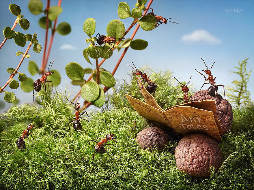 01-Ant-Tales-Andrey-Pavlov-Photographs-of-Ants-an-Affordable-Journey-to-a-Parallel-World