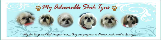 My adorable shih tzus