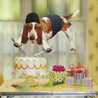Mensagens De Aniversário Engraçadas Mensagens Para Celular Gratis
