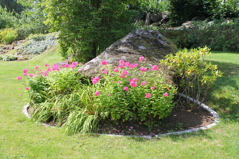 Flox autunnali in fiore