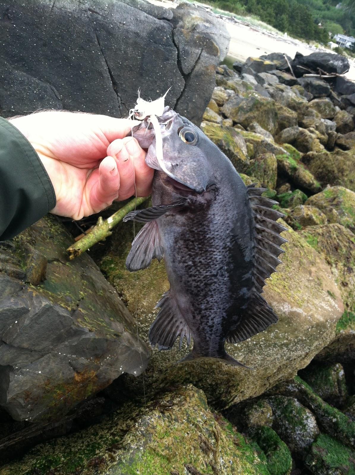 Brian marz 39 s fly fishing oregon blog oregon coast fly for Jetty fishing oregon