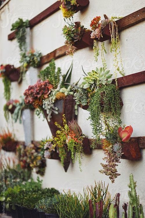Outdoor wall plants