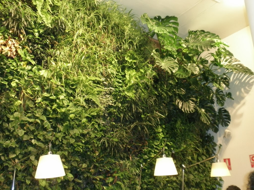 Plantas para jardines verticales monstera deliciosa - Jardines verticales plantas ...