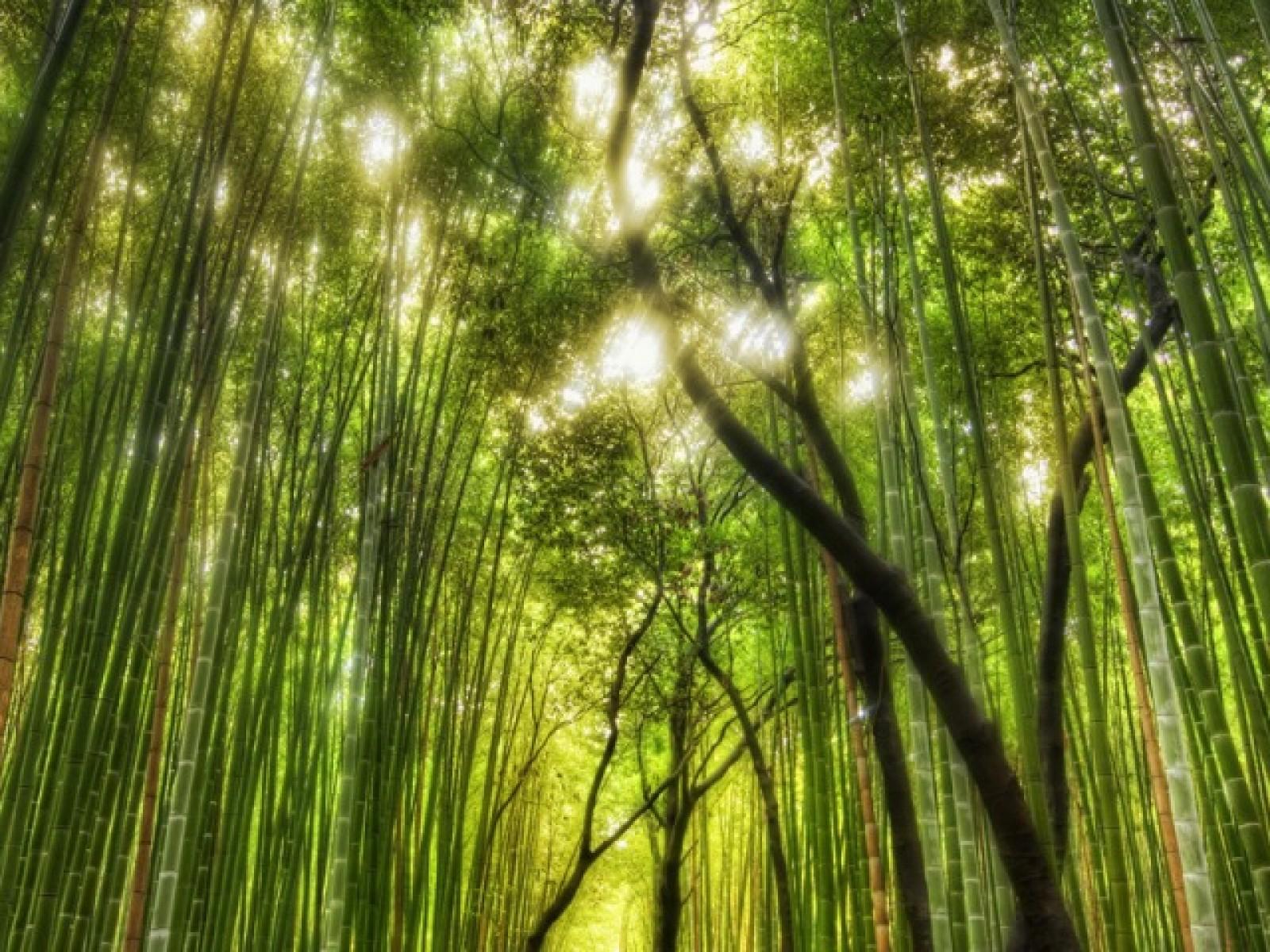 http://3.bp.blogspot.com/-0CliwLZasEA/TqwPaK543KI/AAAAAAAABbM/0flwZFQbYBc/s1600/bamboo-forest.jpg