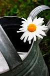 Trädgårdsbloggare - uppdelat på växtzon