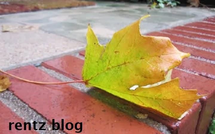 rentz blog