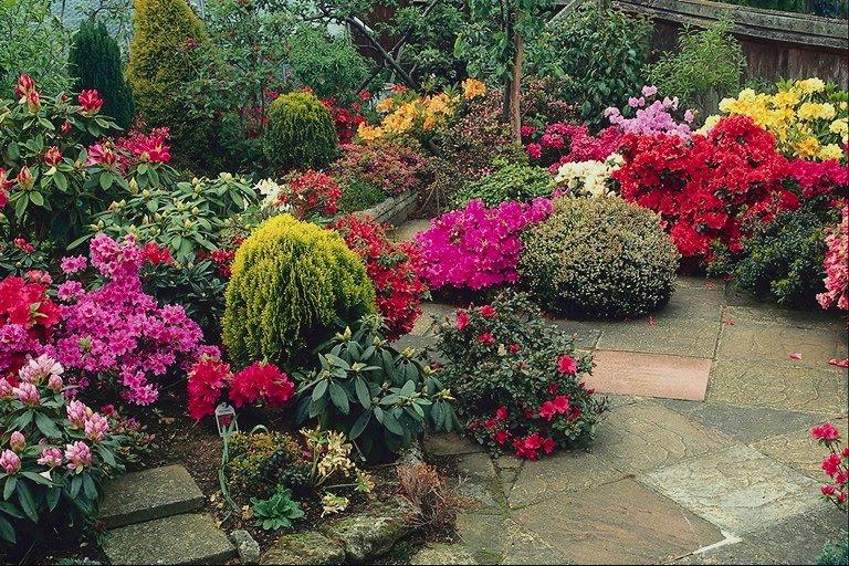 Plantas y flores plantas especies plantas ornamentales for Arbustos para patios
