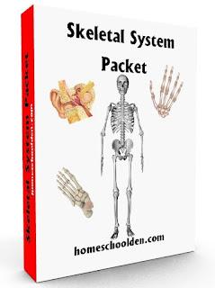 http://homeschoolden.com/2015/05/18/skeletal-system-worksheet-packet-6-hands-on-activities-about-bones/
