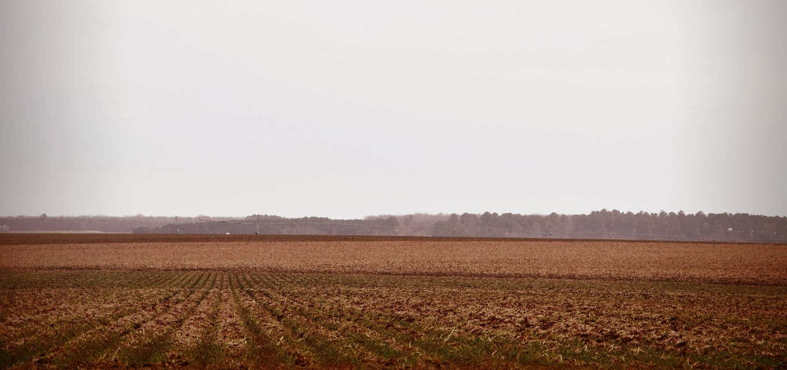 winter fields noxubee co ms @ Hickory Ridge Studio
