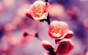 źródło (kwitnacej kwiaty wisni)