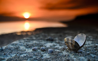 SEASHELL AT BEACH SUNSET