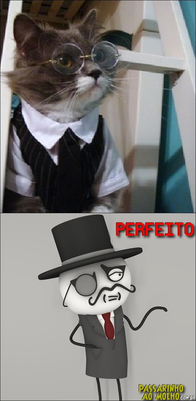 feel liek a sir, tirinha, gatinho
