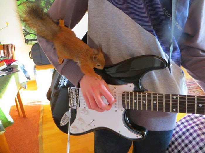 injured baby squirrel