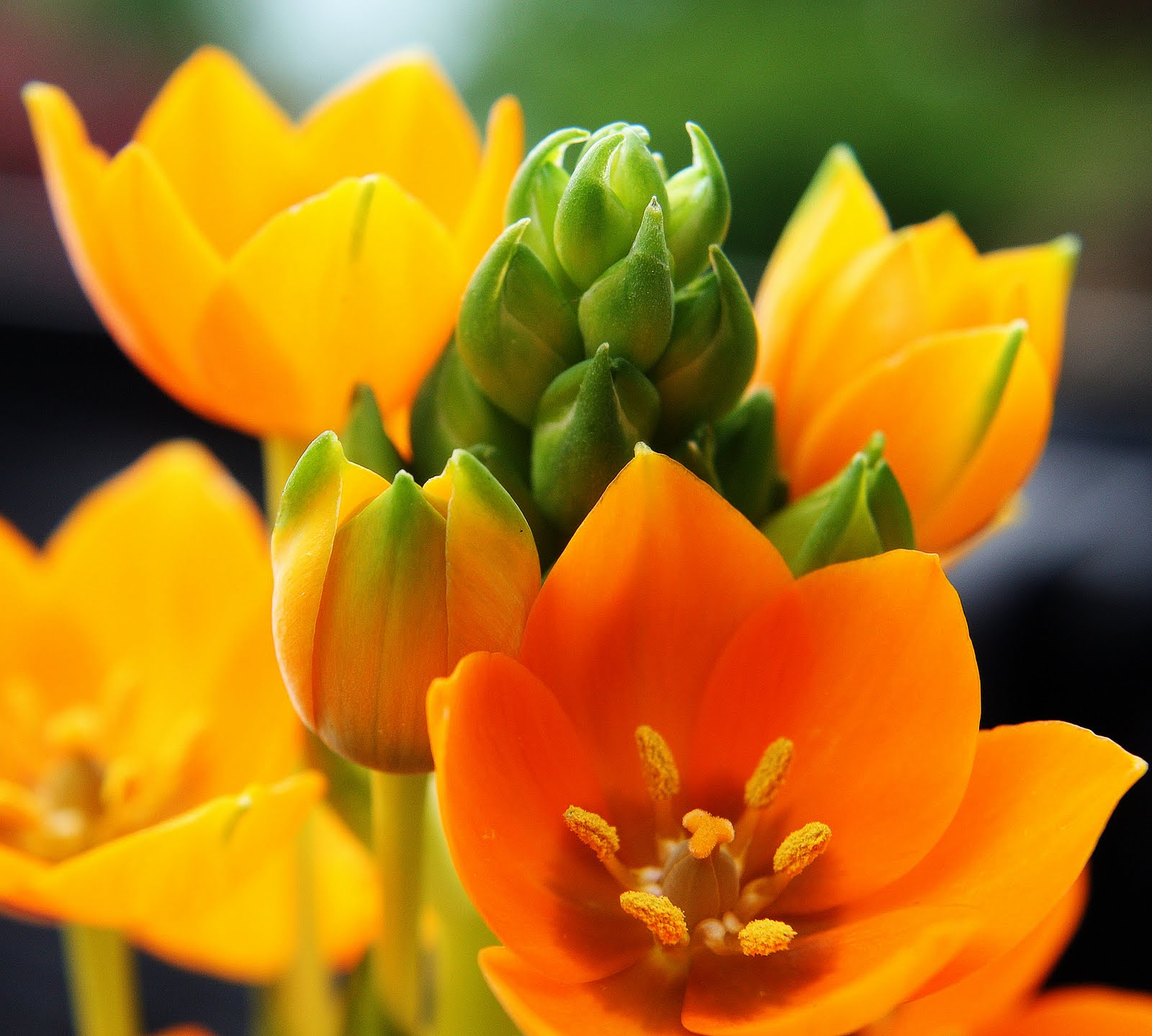 CARLETTA S CAPTURES An Orange Star Plant for Mother s Day