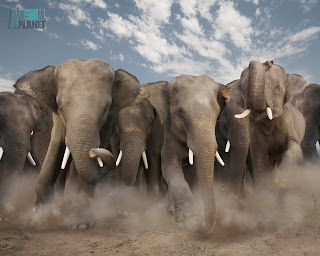 Wildlife-Elephant-Wallpapers
