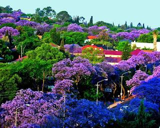 arboles verdes, azules, violetas en una ciudad