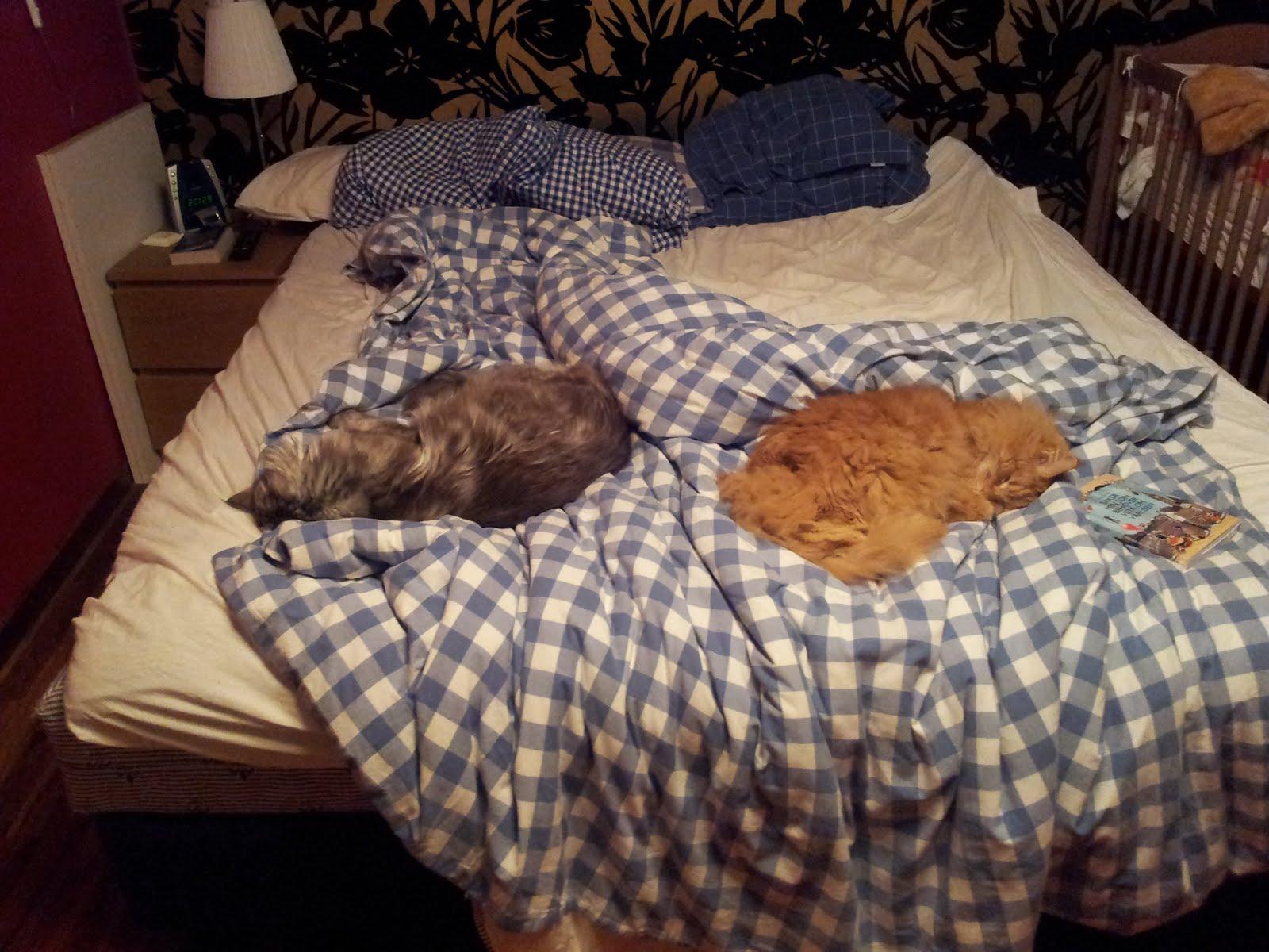 Zammy och Mille ockuperar sängen