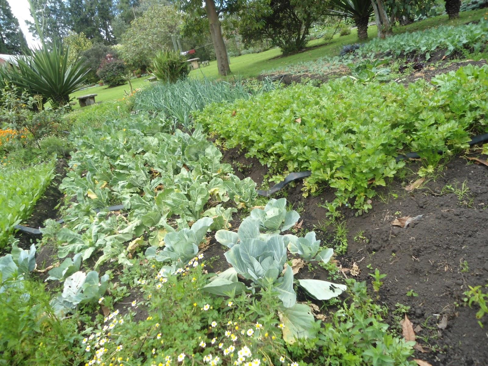 Jovenes rurales emprendedores for Alelopatia en hortalizas