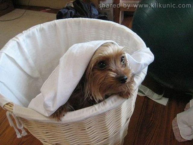 http://3.bp.blogspot.com/-0FKQA_W28Oc/TXzE7kZGK4I/AAAAAAAAREw/JjG_jR38aKs/s1600/these_funny_animals_635_640_24.jpg