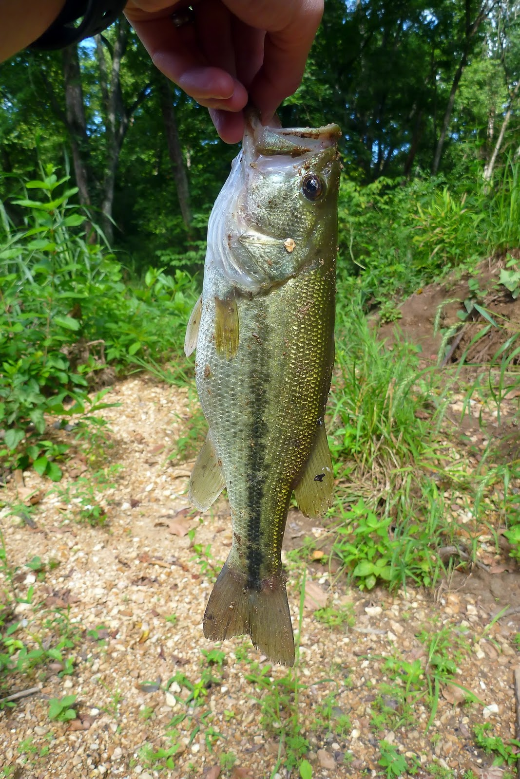 Fishing in central missouri northern ozarks for Missouri bass fishing