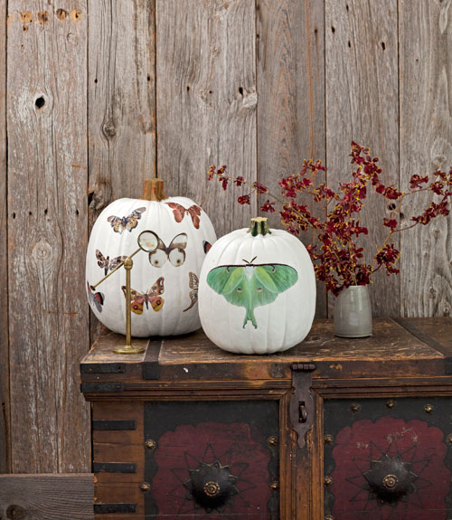 My favorite unique pumpkin decorating ideas decorology Unique pumpkin decorating ideas