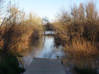 pasarela Desembocadura Gállego en Ebro inundada Zaragoza