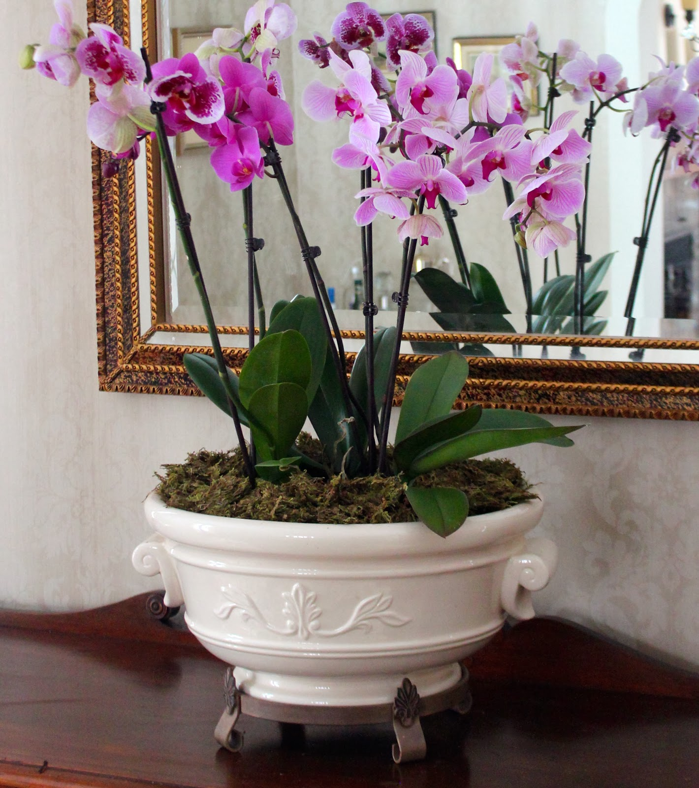Caring For Orchids New House New Home