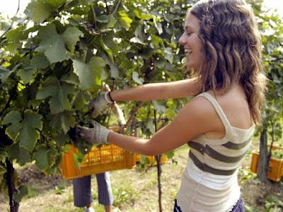 Raccogliere uva, oliva presso amici o parenti é legale?