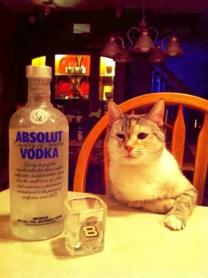 Funny cats - part 92 (40 pics + 10 gifs), cat and a bottle of vodka
