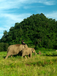 Elephant Conservation Centre is located outside the city but that conservation is one of the best elephant conservation