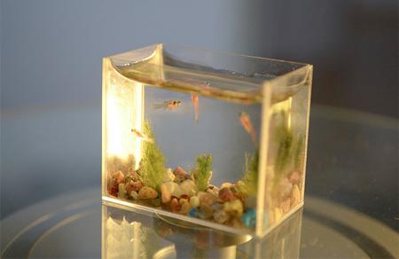 The world's smallest Aquarium