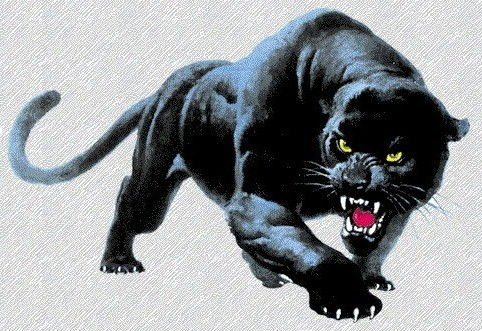 Funny+Panther_2.jpg