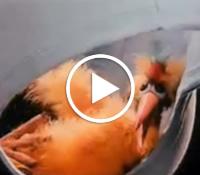 Propaganda da Cueca Zorba com seu famoso passarinho