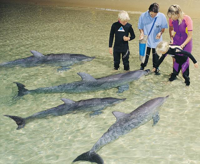 Семья дельфинов и люди. Тангалума. Австралия