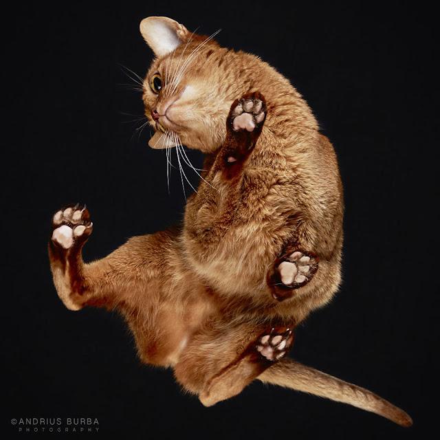 Fotógrafo revela uma forma diferente de se ver os gatos