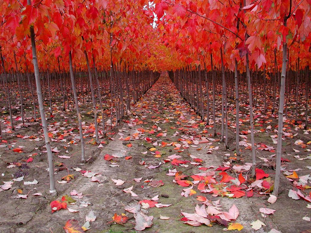 autumn season wallpapers hd - photo #45
