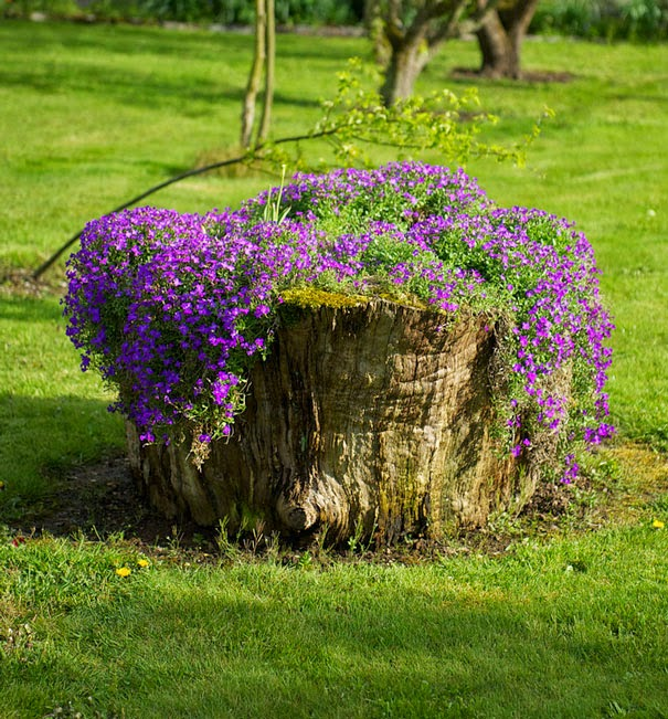 el tronco de un rbol talado con bonitas flores de color violeta