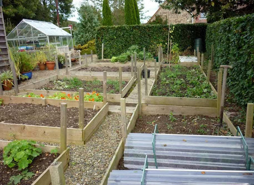 Variety of vegetables are easily grown in backyard for Backyard vegetable garden design ideas