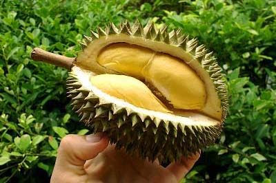 Durian fruit that contain phosphorus and iron that useful for health